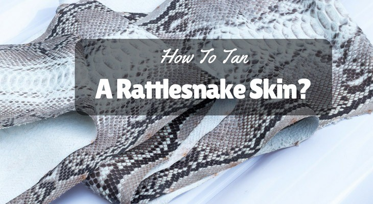 How-To-Tan-A-Rattlesnake-Skin