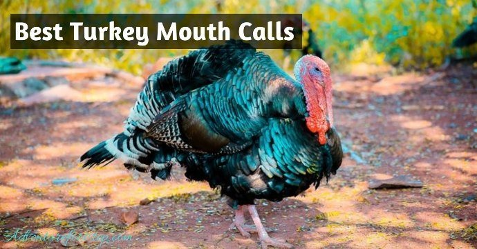 Best-Turkey-Mouth-Call