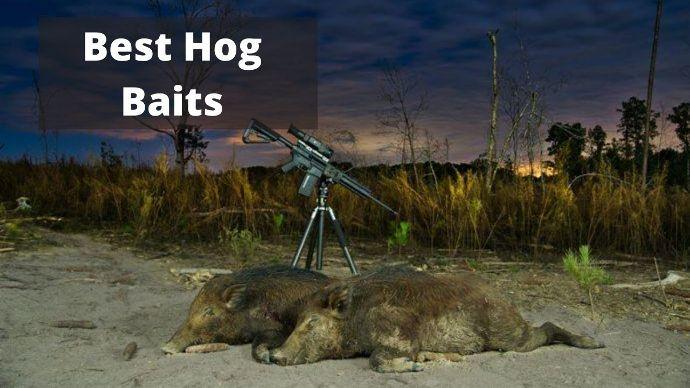 Best-Hog-Baits