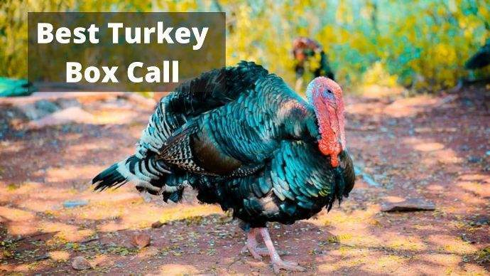 Best-Turkey-Box-Call