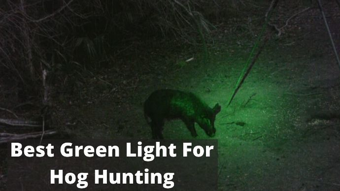 best-green-light-for-hog-hunting-review