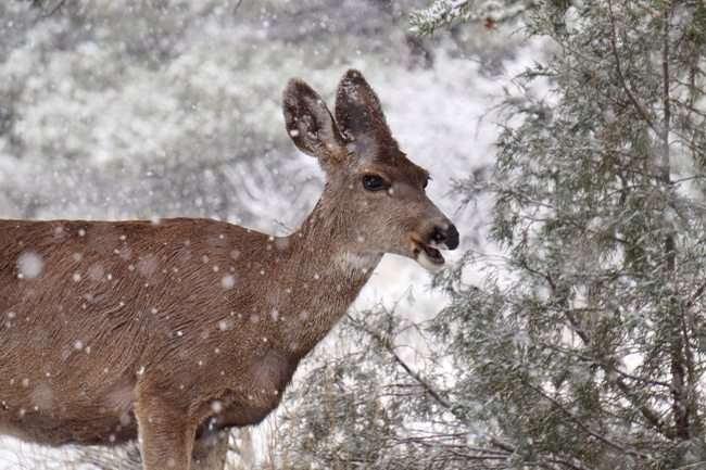 what-do-deer-eat-in-the-winter