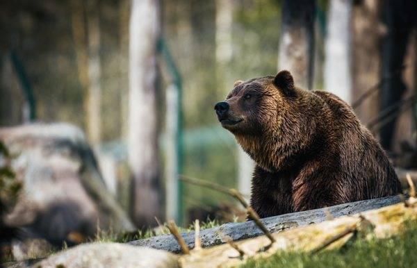 hunt-and-kill-a-bear