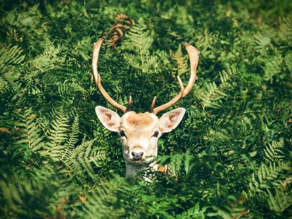 how-to-find-deer-in-the-woods